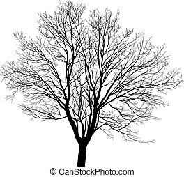 Maple young tree - Silhouette maple tree, black drawings on...
