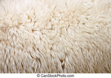 Zoom Wool of sheep. - The Zoom Wool of sheep.