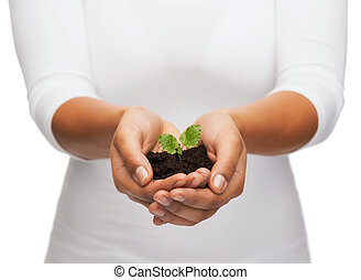woman hands holding plant in soil - fertility and nature...