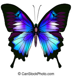 Butterfly - Isolated Butterfly Vector Illustration