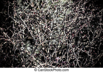 Thorn bush - a creepy thorn bush with a lot of prickly...