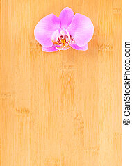 lilac  orchid on bamboo  background