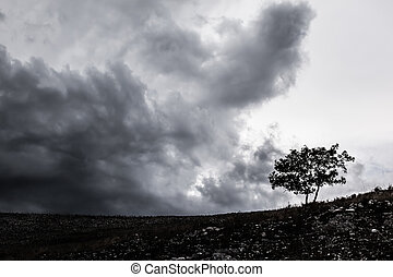 Lonely tree - a lonely tree silhouette over a stormy and...