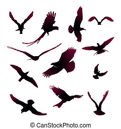 Vector Collection of Bird Silhouett