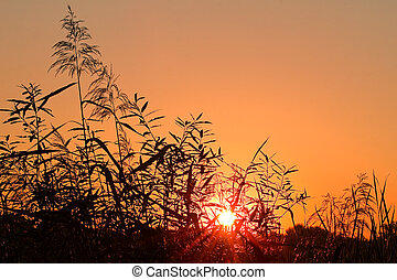 Sunrise with halo around the sun - Reed silhouettes and halo...
