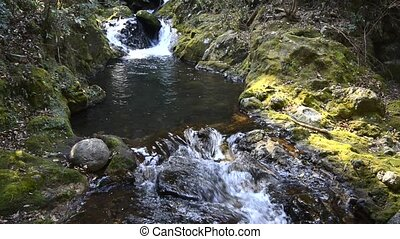 Creek flowing - A small creek flowing through mossy rock