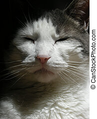 Grey and White Cat - Stock photo of the head of a pretty...