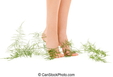 female feet with green plant - picture of female legs with...