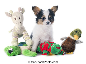 papillon puppy and toys - papillon puppy in front of white...