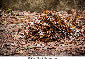 Dead leaves pile - a lot of dead, dry leaves in the...