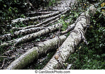 Logs - old and weathered tree trunks in a forest