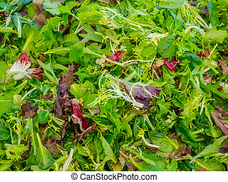 Baby mixed salad greens - Fresh organic baby mixed salad...