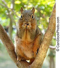 Uh-Oh - Funny squirrel covering mouth with paws