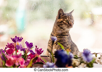 Cuteness - an adorable cat looking inside from a dirty...