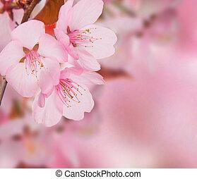 primavera, conceito