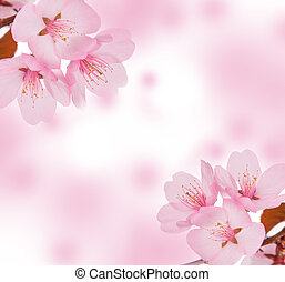 Spring concept. Pink blossom or background.
