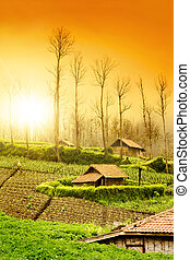 Farmland  - Fresh Farmland Sunrise in Asian Country