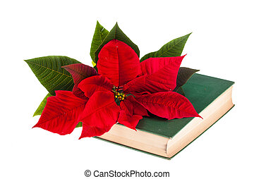 Poinsetta and book - A poinsetta flower on the top of an old...