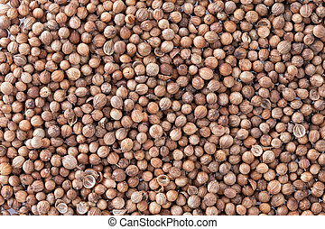 Coriander Seeds Coriandrum sativum texture background Also...