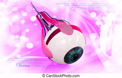 Human eye - digital illustration of a Human eye in digital...