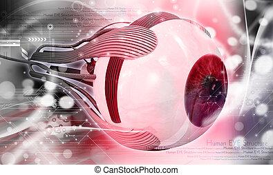 Human eye - digital illustration of a Human eye in digital...