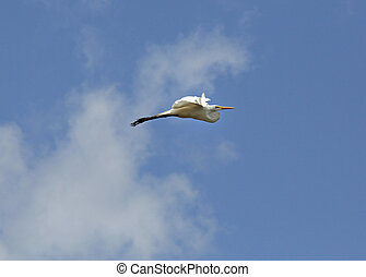 Great White egret, Kaw-Roura National Nature Reserve, French...