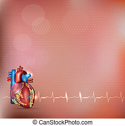 Cardiology background - Human heart detailed anatomy and...