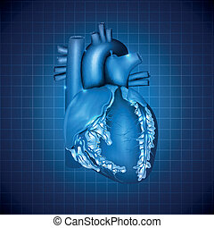 Human heart medical illustration, abstract blue design -...