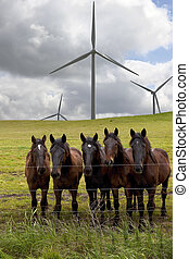 Power Generating Windmills, Horses