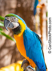 Blue Parrot portrait with yellow neck in the park