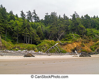 Trees Growing at the Edge of a Beach