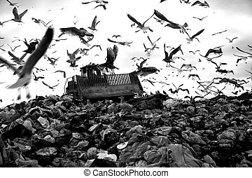 Landfill and birds