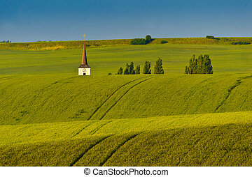 Grassy field - Summer evening in green and grassy fields