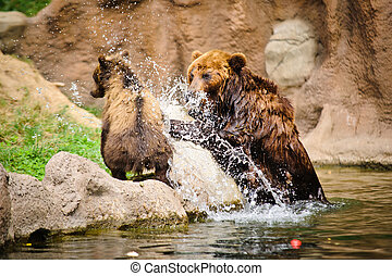 Kamchatka bear playing in water pool