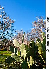 Mediterranean spring in Javea Denia with flower almonds -...