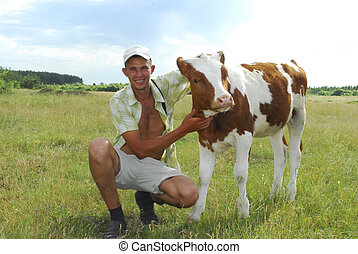 Shepherd cow pats - Shepherd tanned cow pats on the