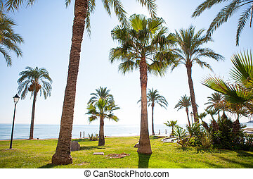 Oropesa de Mar in Castellon palm tree garden in...