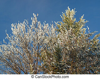 Snowy Tree Branches Background as Seen from Below