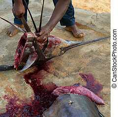 African man cutting the sailfish marlin to clean fish...