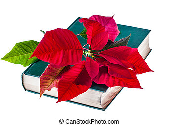 Poinsettia on book - the holy bible with a poinsettia flower...