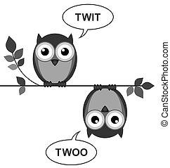 Owls calling