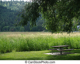 A Picnic Table Under a Shade Tree
