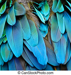 Harlequin Macaw feathers - Colorful feathers, Harlequin...
