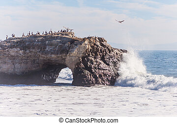 Natural Bridges State Beach is a 65-acre 26 ha California...
