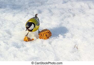 山雀, 冬天