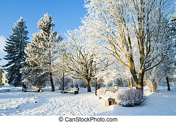 City park winter day. Sillamae, Estonia. - Trees covered...