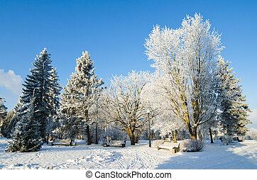 City Park sunny frosty day