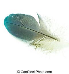bird feather isolated - Bird feather, isolated on a white...