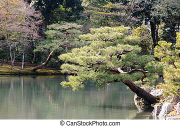 Japanese garden at famous Kinkakuji - Kyoto, Japan -...