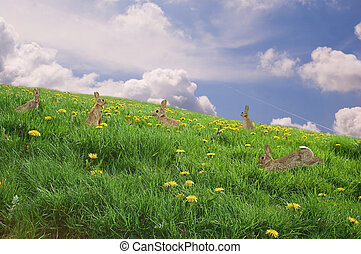 Rabbits in a field - Easter Concept: Bunnies in a meadow...